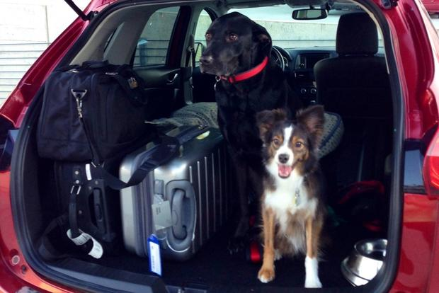 Top 5 Dog-Friendly Cars